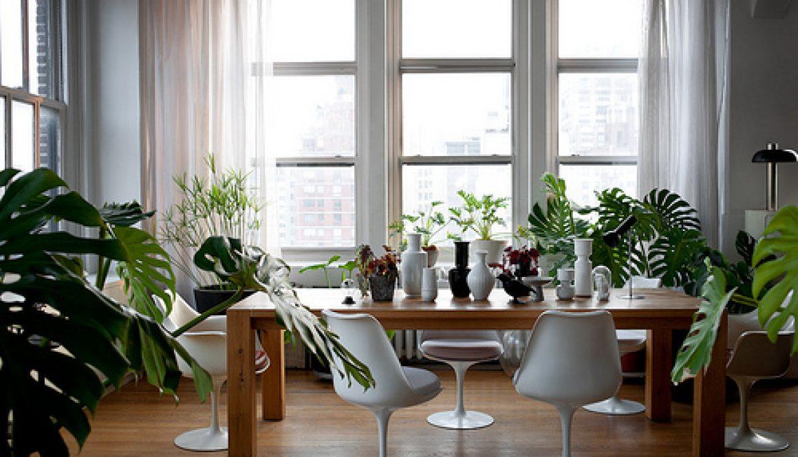 Deco_maison_plantes